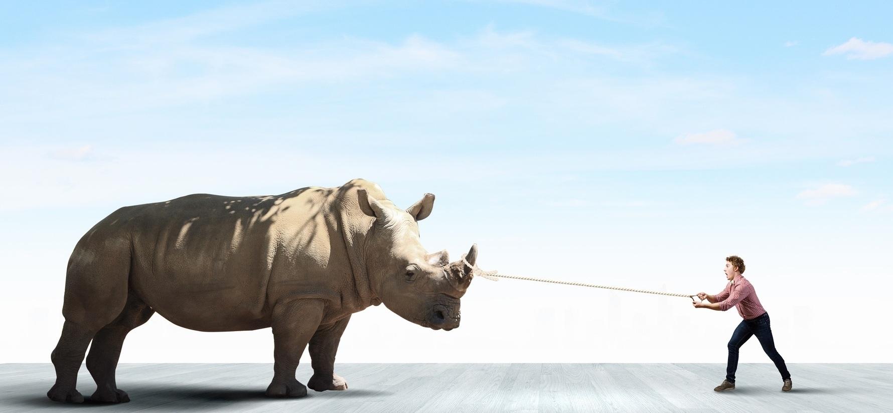 rhino-e1416784700769